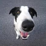 Esikatselukuva albumille: Koiria metsässä 06072006
