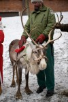 Esikatselukuva albumille: Joulun avaus 23112008